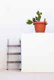 Cactus with white walls Stock Image