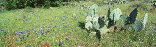 Cactus  and wildflowers Royalty Free Stock Photos