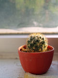 Cactus at the window Stock Photography