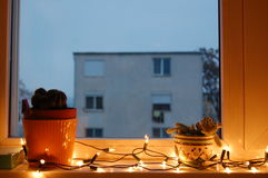 Cactus in the window with Christmas lights. Cactus in flowerpot in the window with Christmas lights royalty free stock images