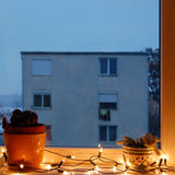 Cactus in the window with Christmas lights. Cactus in flowerpot in the window with Christmas lights stock images