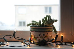 Cactus in the window with Christmas lights Stock Photography