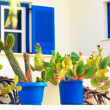 Cactus and windows Royalty Free Stock Photography