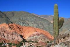 Cactus in Woestijnen in de middag Royalty-vrije Stock Foto's