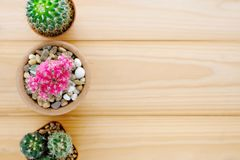 Cactus on wood background with copy space, top view, flat lay, s Royalty Free Stock Image