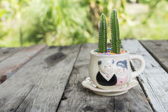 Cactus On Wood floor in garden. Blurred bokeh green background Royalty Free Stock Photos