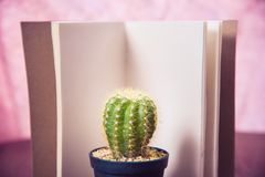 Cactus on wood and notebook Still Life , Cactus Plants on Vintage Wood Background Texture. Royalty Free Stock Photo