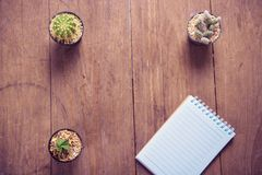 Cactus on wood and notebook Still Life , Three Cactus Plants on Vintage Wood Background Texture. Royalty Free Stock Photography