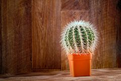 Cactus on wood. Cactus plant on vintage wood background texture. Concept real Life. Still life with Echinocactus. Copy space. royalty free stock image