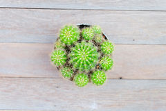 Cactus on wood table Royalty Free Stock Images