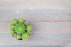 Cactus on wood table top view Stock Photos