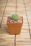 Cactus on the wooden background Royalty Free Stock Photography