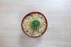 Cactus on wooden table. Top view Royalty Free Stock Photo