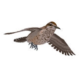 Cactus Wren. 3D rendering with clipping path and shadow over white Royalty Free Stock Photos