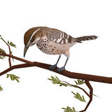 Cactus Wren. 3D rendering with clipping path and. Shadow over white Stock Photo