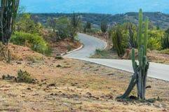 Cactus y carretera con curvas Imagen de archivo