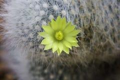 Cactus y flor Imagen de archivo