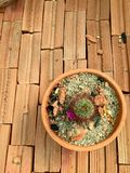 Cactus y flor imagen de archivo libre de regalías