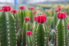 Cactus y flores hermosos Imagen de archivo libre de regalías