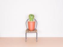 Cactus y mini silla, estilo del minimalismo Fotografía de archivo
