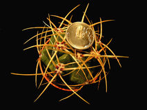 Cactus y moneda del Gymnocalycium Imágenes de archivo libres de regalías