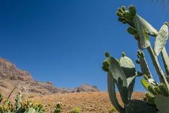 Cactus y montañas Imagenes de archivo