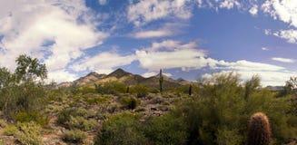 Cactus y montañas del desierto de Arizona Imágenes de archivo libres de regalías