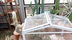 Cactus y muchos pequeños árboles para la planta decorativa crecida en el invernadero almacen de video