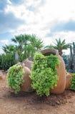 Cactus y palma Imagen de archivo libre de regalías