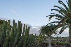 Cactus y palmera Fotografía de archivo libre de regalías