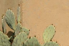 Cactus y pared Fotos de archivo libres de regalías