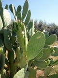 Cactus y sol imagenes de archivo