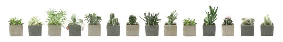 Cactus y Succulent Foto de archivo