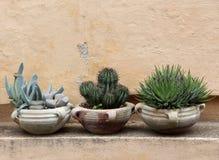 Cactus y succulents en tarros de la terracota Imágenes de archivo libres de regalías