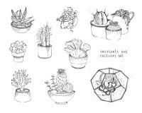 Cactus y succulents fijados Plantas de la colección en los potes, florarium aislados en el fondo blanco Ilustración drenada mano Imágenes de archivo libres de regalías