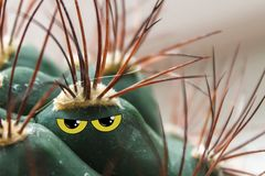 Cactus with yellow eyes and hostile look collage. Cactus with yellow eyes and hostile look, collage royalty free stock photography