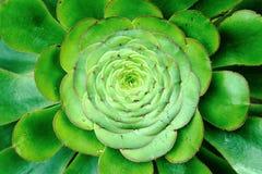 Cactus zen Royalty-vrije Stock Foto