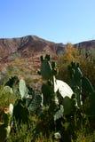 Cactus on Zoo, Tabernas, Almeria. Mini Hollywood in Tabernas, Almeria Stock Photo