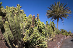 cactus2 Стоковые Изображения