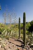 cactus4 Стоковые Изображения