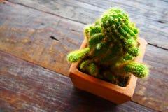 Cactusbloem op houten lijst Stock Afbeeldingen