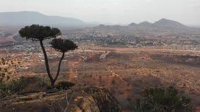 Cactusboom boven Voi in Kenia Royalty-vrije Stock Foto