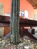Cactusdecor stock afbeelding