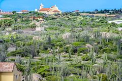Landscape with cacti and brush plants, Aruba royalty free stock photo