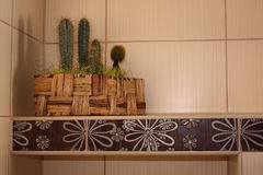Cactuses in bathroom Stock Images