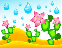 Cactuses blossoming under rain Royalty Free Stock Image