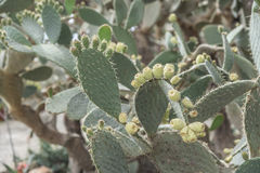 Cactuses in the botanical garden. Stock Photos