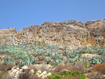 Cactuses on the cliffs. By the mediterranean sea royalty free stock photography