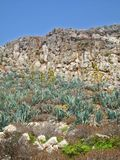 Cactuses on the cliffs. By the mediterranean sea royalty free stock photos