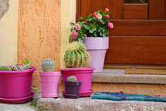 Cactuses in colorful pots by a doorstep Royalty Free Stock Photography